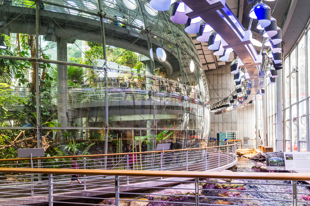 California Academy of Sciences Shows How Cool the Environment Can Be